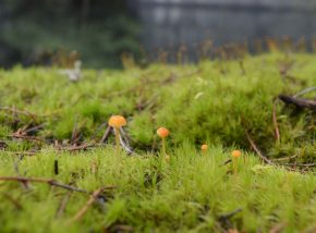 close up of grass and tiny fungus