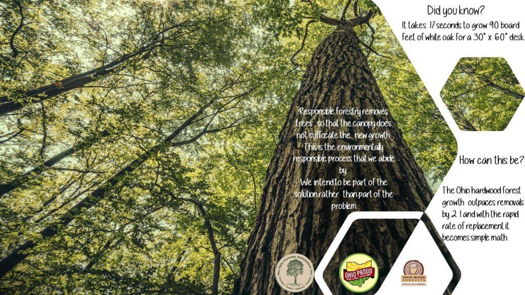 Mantra trees